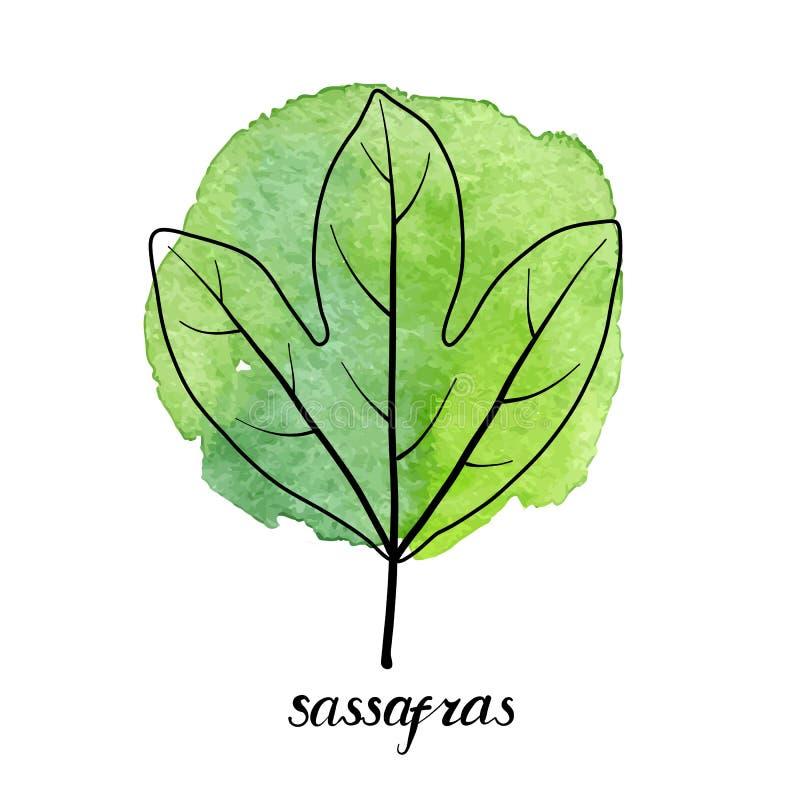 Hoja del vector del árbol de sasafrás ilustración del vector