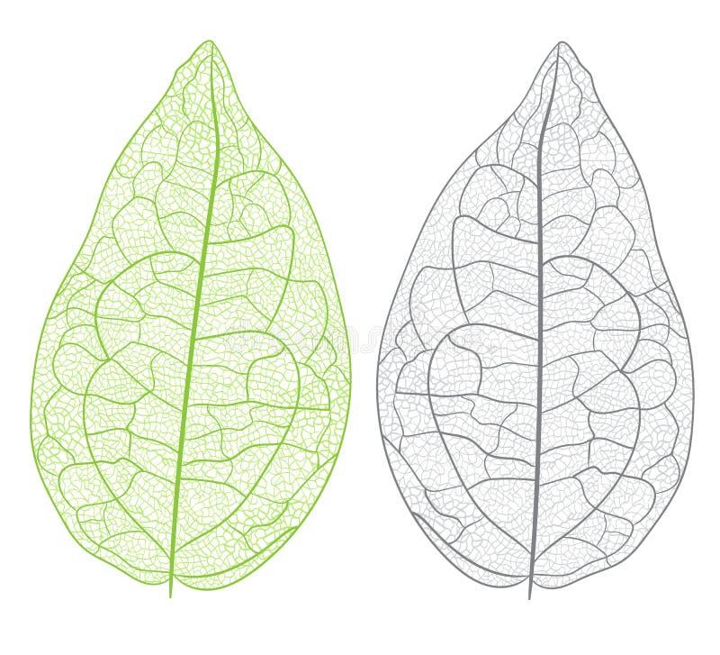 Hoja del vector aislada ilustración del vector