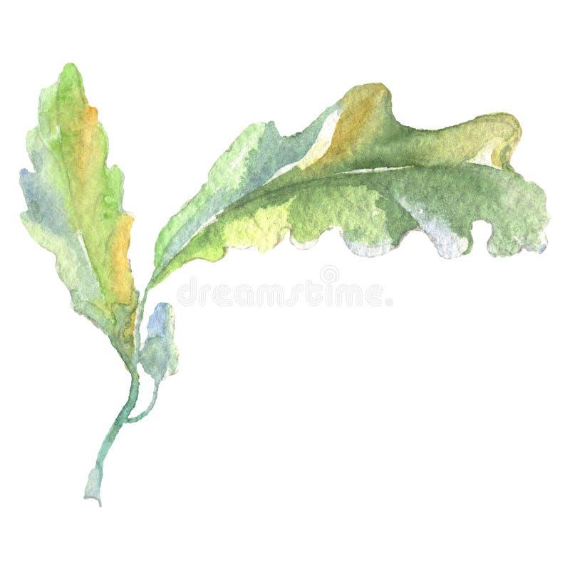 Hoja del verde de la bellota del bosque Sistema del ejemplo del fondo de la acuarela Elemento aislado del ejemplo del roble ilustración del vector