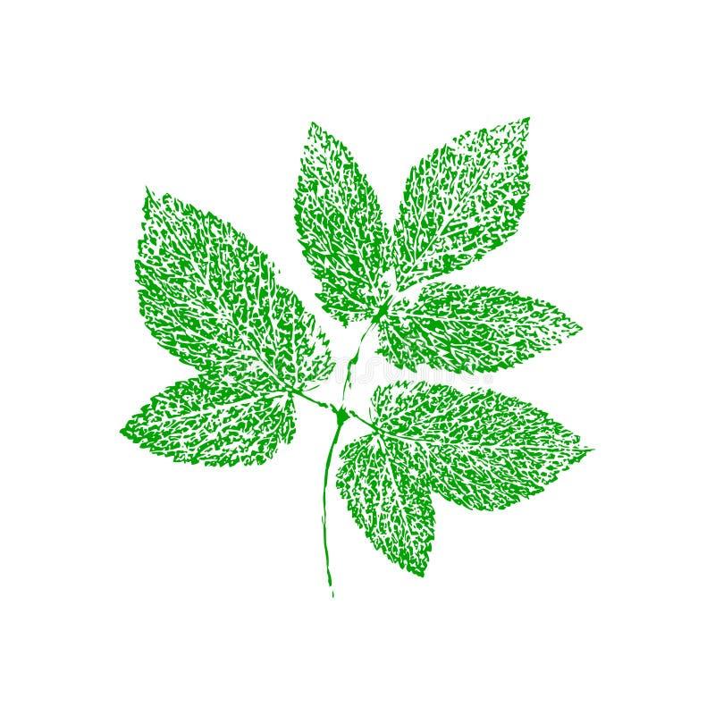 Hoja del verde del dibujo de estudio del vector stock de ilustración