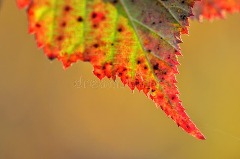 Hoja en colores del otoño fotos de archivo libres de regalías