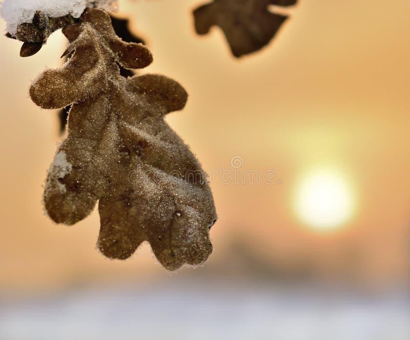 Hoja en salida del sol hermosa en invierno fotos de archivo libres de regalías