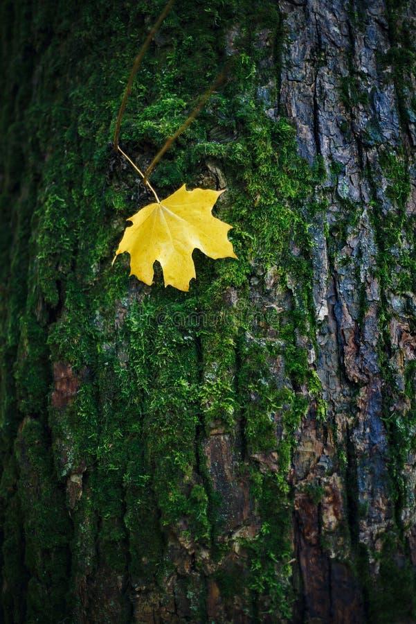 Hoja en un tronco de árbol fotografía de archivo