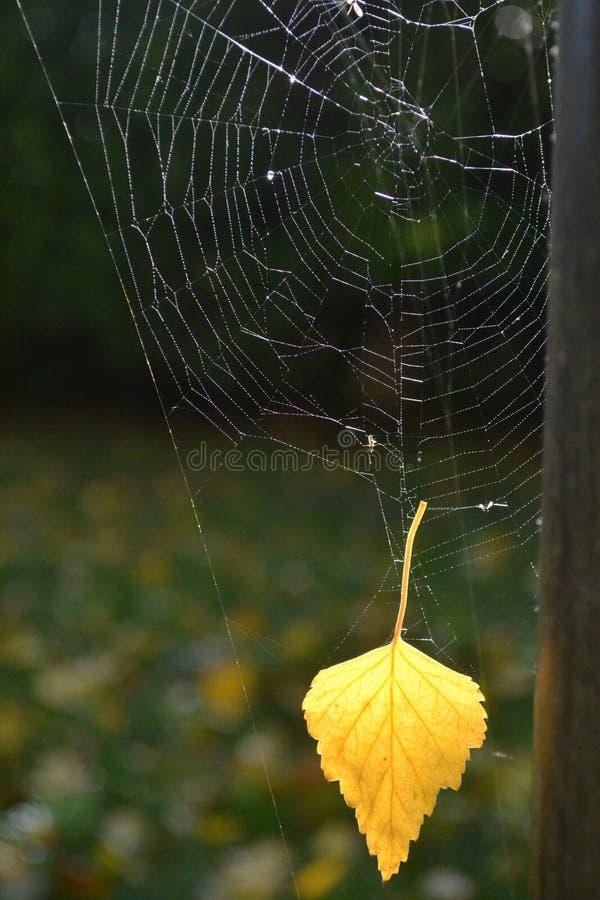 Hoja en un web de araña foto de archivo