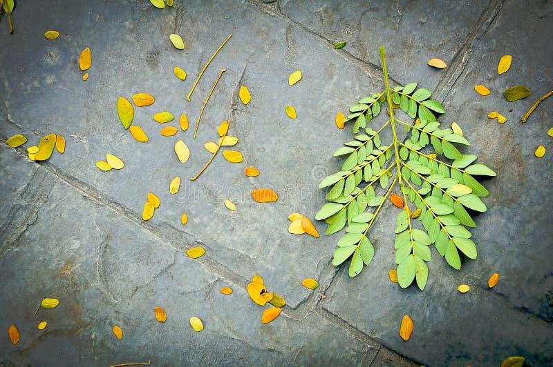 Hoja fresca y seca en la tierra negra del cemento imagen de archivo