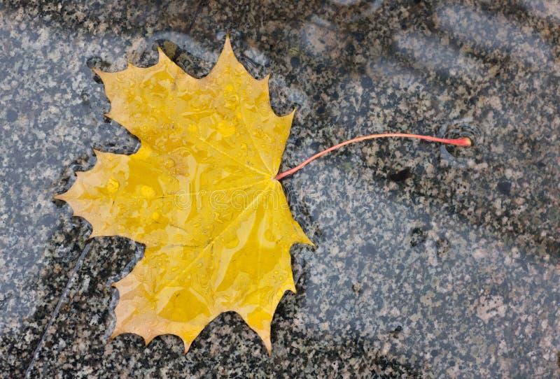 Hoja mojada del otoño foto de archivo