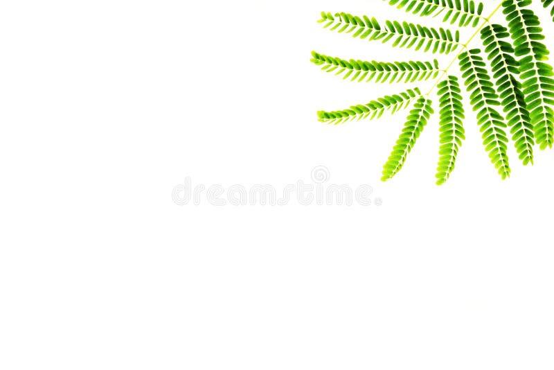 Hoja o frontera verde del helecho imagenes de archivo