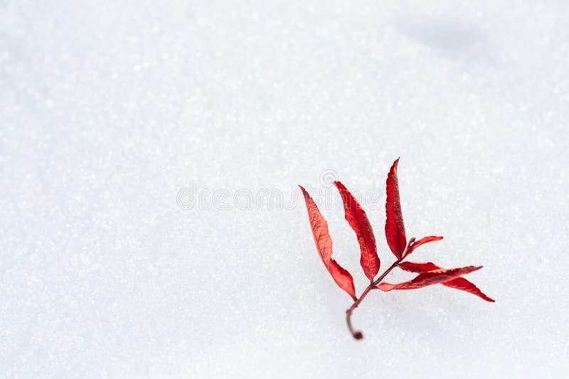 Hoja roja del otoño en la nieve imagen de archivo