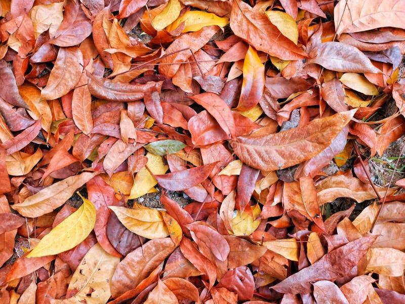 Hoja seca colorida en la tierra fotos de archivo