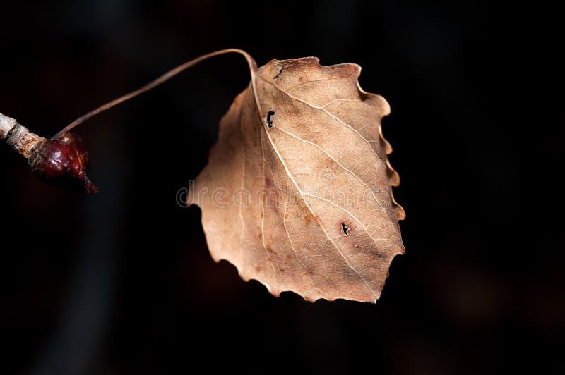 Hoja seca del otoño imágenes de archivo libres de regalías
