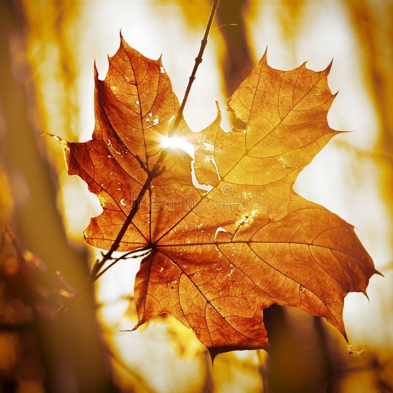 Download Hoja seca del otoño foto de archivo. Imagen de brillante - 44853904