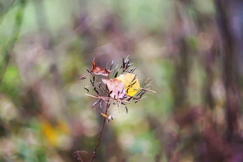 Hoja seca en fondo de la naturaleza en bosque del otoño en noviembre fotografía de archivo libre de regalías
