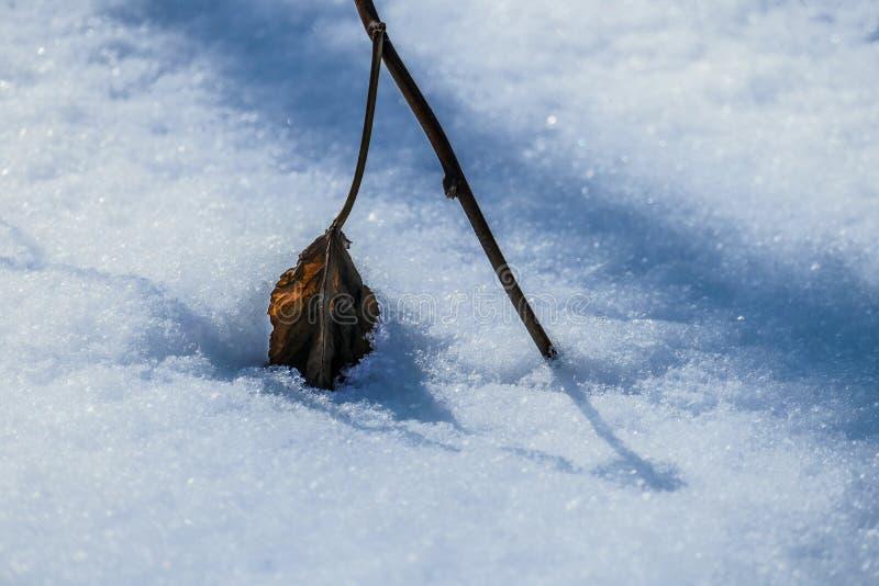 Hoja seca en la nieve imágenes de archivo libres de regalías