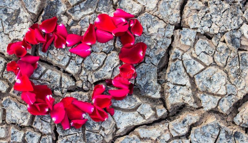 Hoja seca en la tierra fotos de archivo