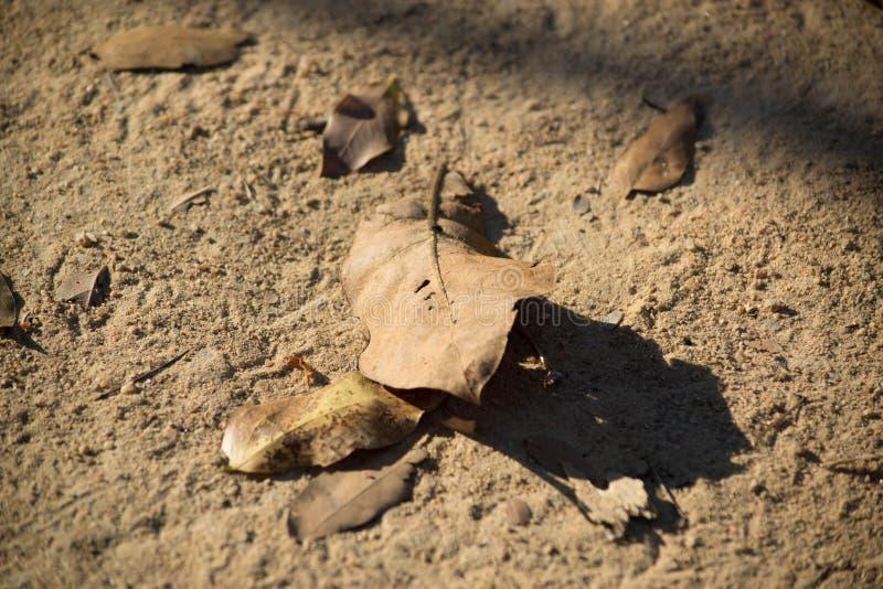Hoja seca en la tierra seca foto de archivo