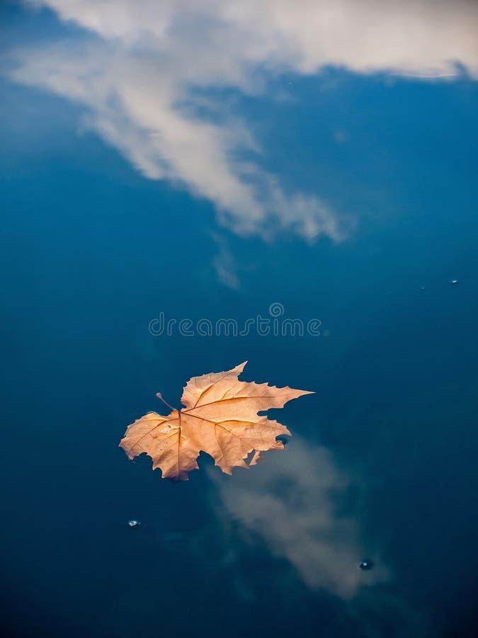 Hoja secada en el agua 1 imagen de archivo