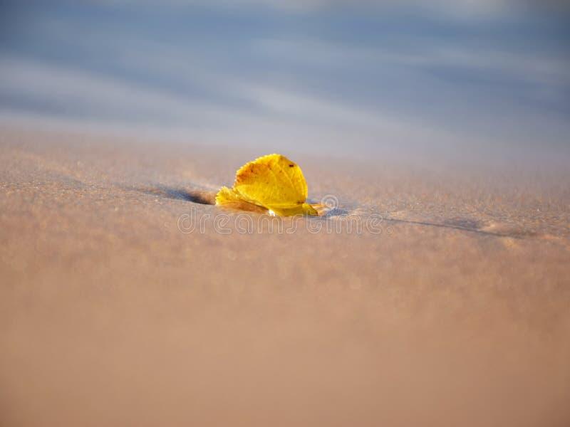 Hoja sola en la arena de la duna, imagen abstracta, fotos de archivo libres de regalías