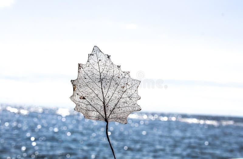 Hoja transparente con el mar del fondo imagen de archivo