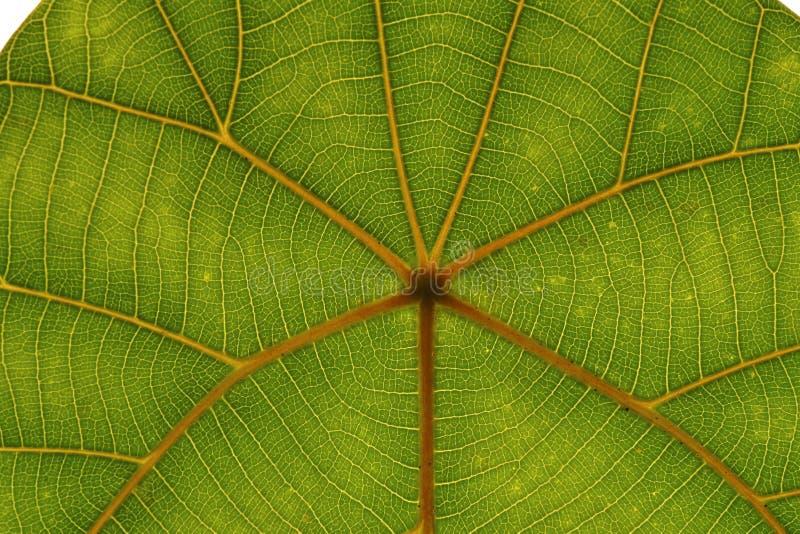 Hoja tropical fotos de archivo