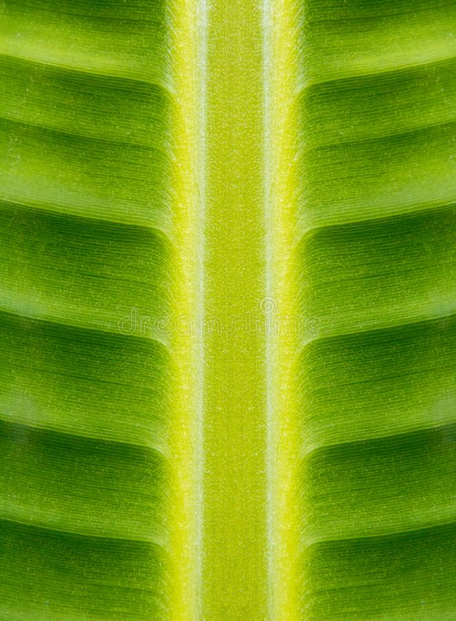 Hoja verde arkivbild