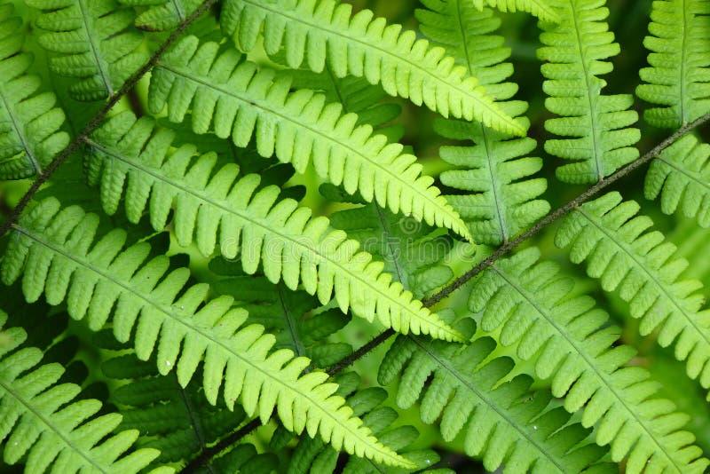 hoja verde fotos de archivo libres de regalías