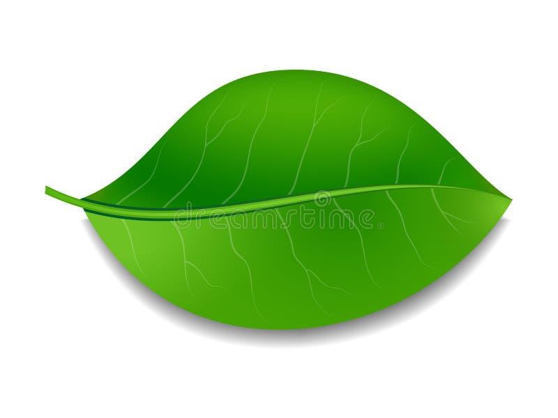 hoja verde ilustración del vector