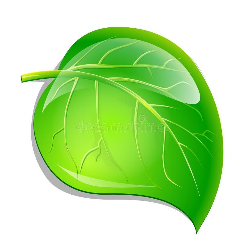 Hoja verde libre illustration