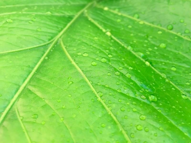 Hoja verde con descenso del agua del foco foto de archivo libre de regalías