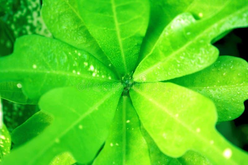 Hoja verde con el punto blanco de la hoja fondo real foto de archivo libre de regalías