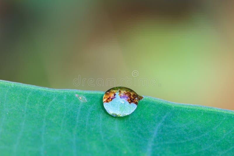 Hoja verde con gotas del agua imágenes de archivo libres de regalías