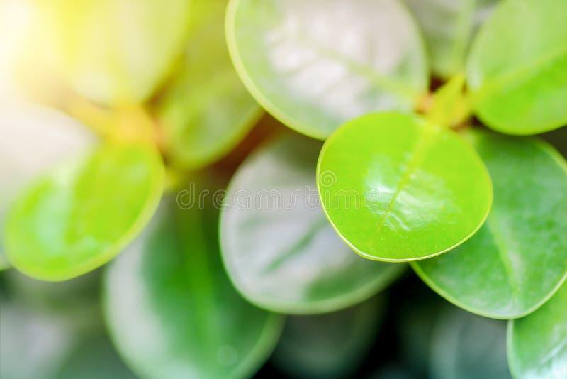 Hoja verde con la luz foto de archivo libre de regalías