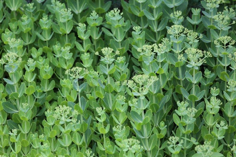 Hoja verde de la flor fotografía de archivo