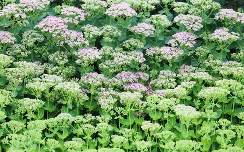 Hoja verde de la flor fotografía de archivo libre de regalías
