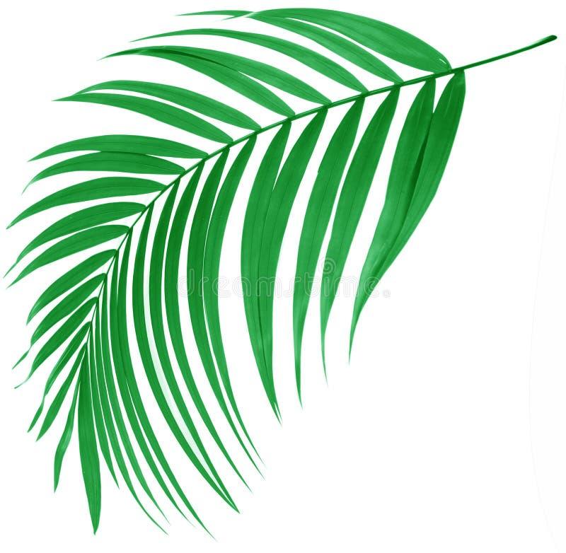Hoja verde de la palmera stock de ilustración