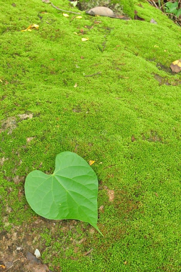 Hoja Verde Del Corazón En Fondo Del Musgo Imagen de archivo - Imagen ...