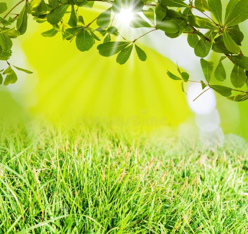 Hoja verde e hierba verde imagenes de archivo