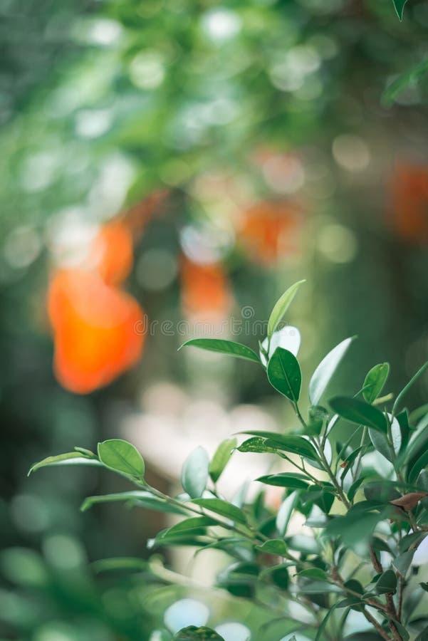 hoja verde en el árbol, tono del vintage foto de archivo libre de regalías