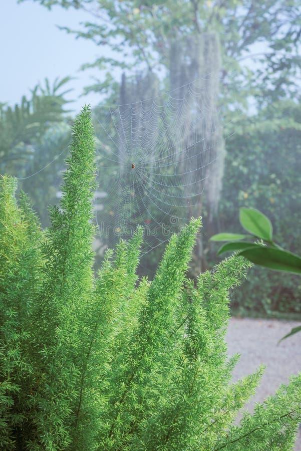 hoja verde en el árbol, tono del vintage imágenes de archivo libres de regalías