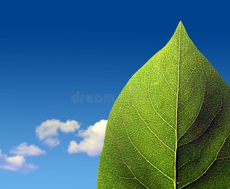 Hoja verde en el cielo nublado imagen de archivo