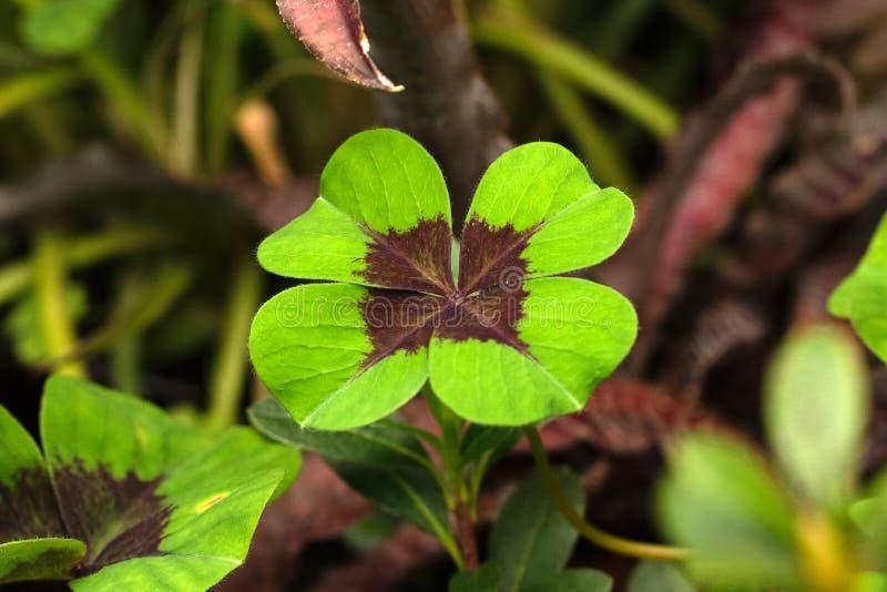 Hoja verde en foco ascendente y suave cercano fotografía de archivo libre de regalías