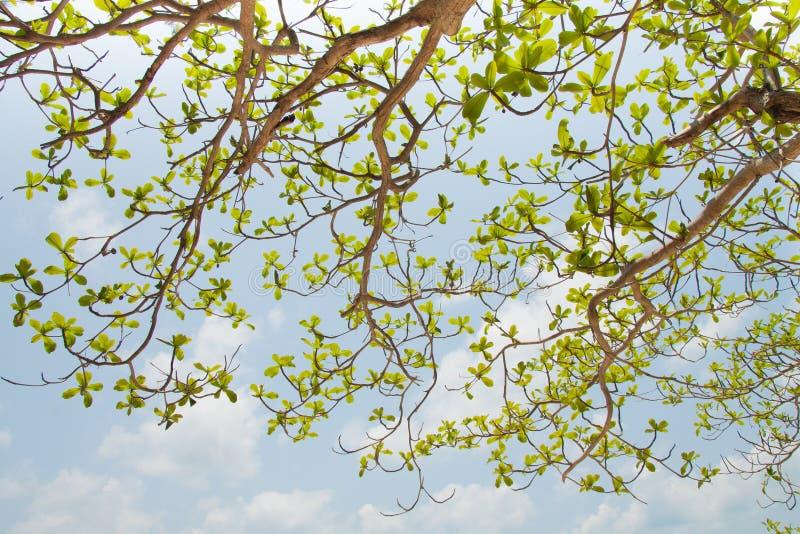 Hoja verde en fondo del cielo azul fotos de archivo