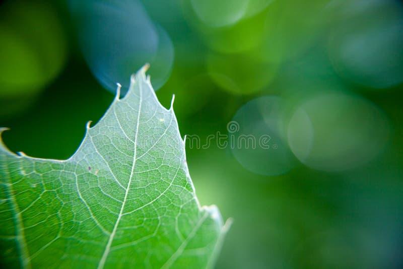 Hoja verde en fondo verde fotos de archivo