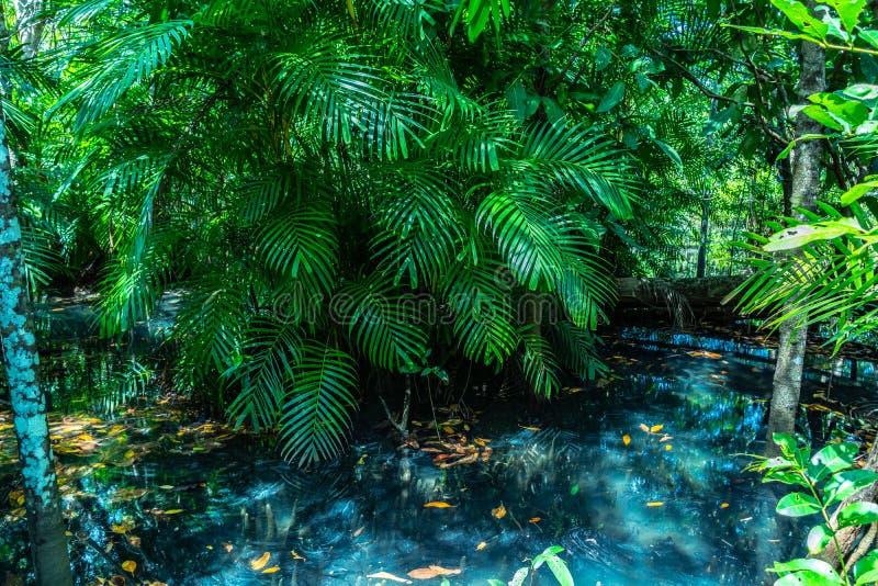Hoja verde en un pantano completo el lugar del agua verde esmeralda foto de archivo