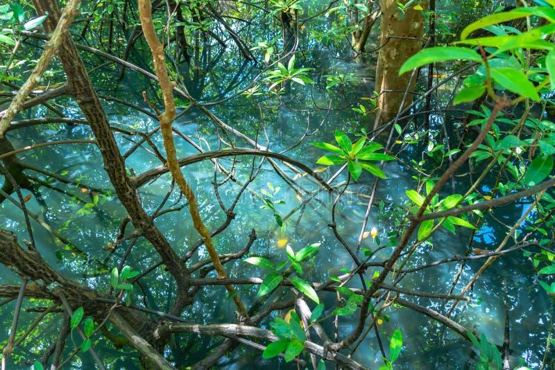 hoja verde en un pantano completo fotos de archivo libres de regalías