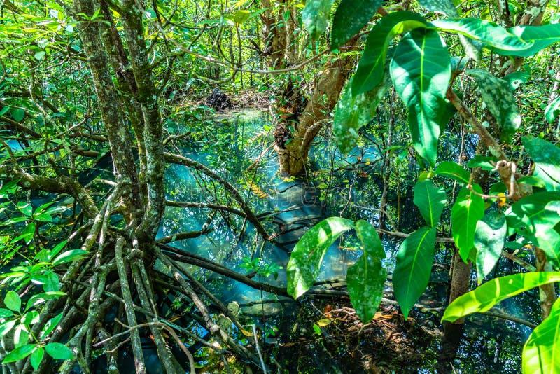 hoja verde en un pantano completo fotos de archivo