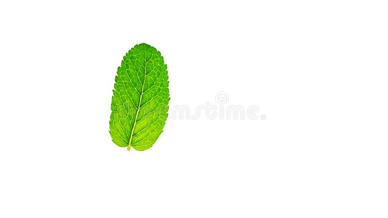 Hoja verde fresca de la menta o del mentha aislada en el fondo blanco foto de archivo