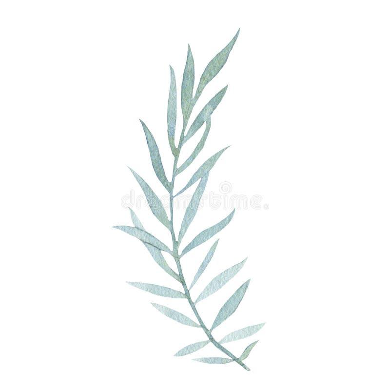 Hoja verde pintada a mano de la acuarela aislada en el fondo blanco ilustración del vector
