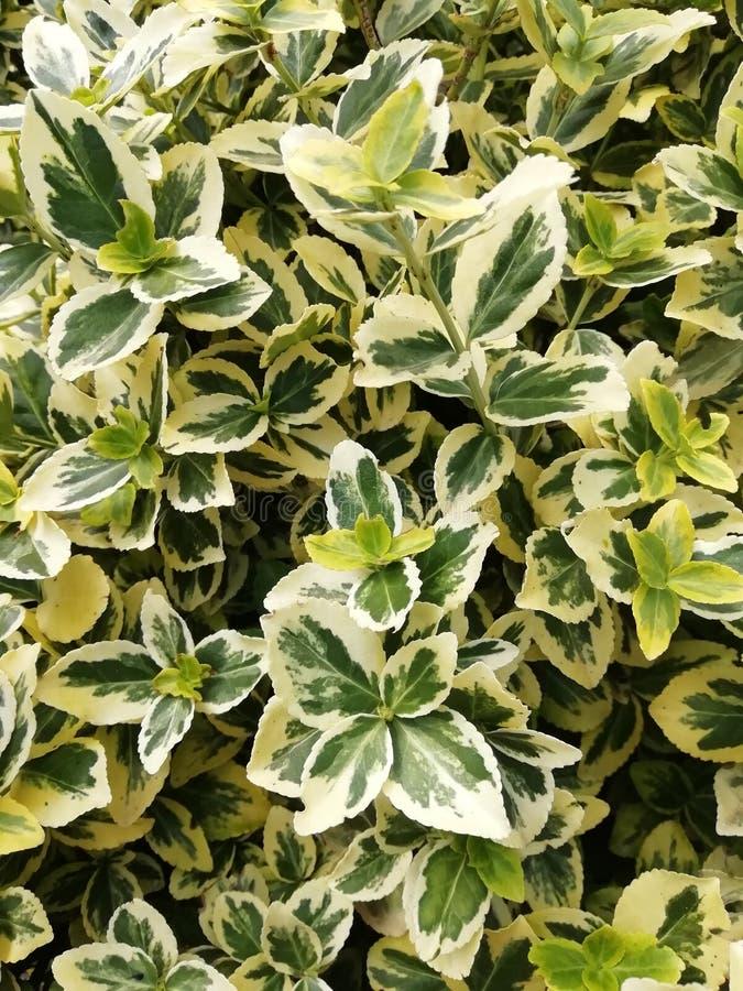 Hoja verde, textura Fondo verde Cierre para arriba Hermoso de diseño fordifferent de las hojas tropicales verdes fotografía de archivo