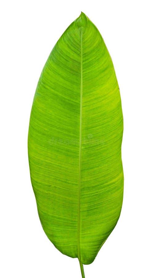 Hoja verde tropical imagen de archivo libre de regalías