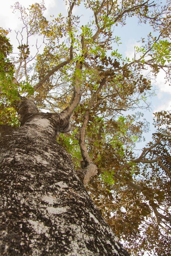 Hoja y árbol verdes en fondo del cielo azul imagen de archivo